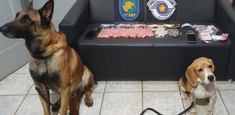 Operação policial prende quatro pessoas e apreende drogas em Fernando Prestes